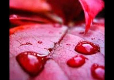 kerala red rain