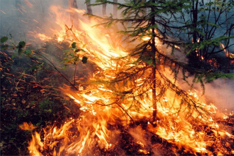 Επιδείνωση της κλιματικής αλλαγής από την πυρκαγιά στην Αλάσκα